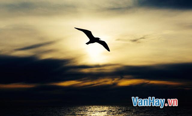 Văn phân tích: Chim Hải Âu của Bô-đơ-le